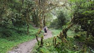 Marche au milieu des rhododendrons