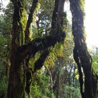Mousses et lichens