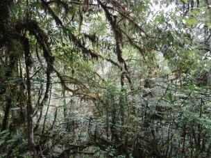 Lianes et forêt tropicales