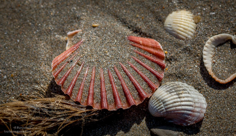 L'Instant 3C : Coquillages-Crustacés-Culture . Autour de Sète.