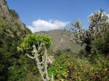 Paysage tropical vers Syafrubesi